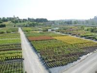 Contratto provinciale OTI Agricoli e Florovivaisti, a tempo indeterminato