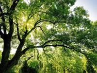 Greening e pratiche agricole equivalenti. Un'analisi sulle possibili ripercussioni del pagamento verde in Italia