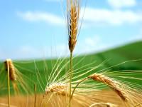 Pil agricolo in ripresa, ma peggiora Il credit crunch