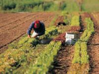 Controlli in agricoltura concentrati al sud
