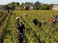 AGRICOLTURA: Assunzioni congiunte, sulla carta tante opportunità da cogliere