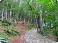 Firmato Protocollo d'intesa con Uncem per valorizzazione settore agricolo in aree montane