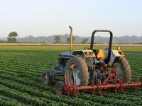Legge di stabilità, Mipaaf: le principali misure per l'agricoltura