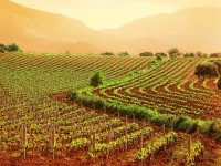 Legge di stabilità: le novità per l'agricoltura dopo l'approvazione in Senato