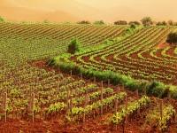 Agricoltura in Campania: Arrivano i primi 35 milioni