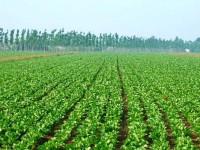 Pubblicato il Piano assicurativo agricolo 2017
