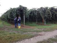 Compenso variabile per i lavoratori occasionali nell'agricoltura