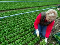 Campagna per la disoccupazione agricola 2018: Le sedi UILA Napoli aperte per i lavoratori aventi diritto