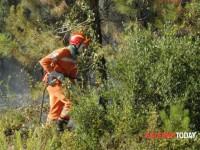 Forestazione: FLAI FAI e UILA; NO a nuovi precari.