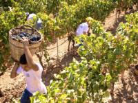 """Agricoltura, sindacati sospendono lo sciopero: """"dal ministro Patuanelli garanzie su Bonus, Pac e Ammortizzatori"""""""