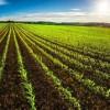 Rinnovato il Contratto Provinciale Agricoli e Florovivaisti. A Napoli c'è l'accordo