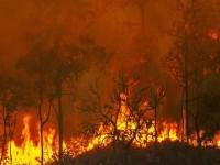 Incendi, il Consiglio dei Ministri ha dichiarato lo stato di emergenza per quattro regioni: Sicilia, Sardegna, Molise e Calabria.  Bene il Cdm. Dichiarazione del segretario generale della Uila-Uil Stefano Mantegazza